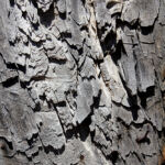 Detail of wood grain on sabino door used to make coffee table