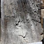 Detail of rustic door used to make coffee table